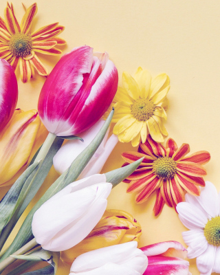 Spring tulips on yellow background - Fondos de pantalla gratis para Nokia C1-00