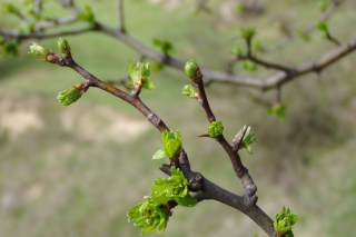 Spring Branch Wallpaper for Android, iPhone and iPad