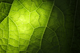 Green Leaf Macro Wallpaper for Android, iPhone and iPad