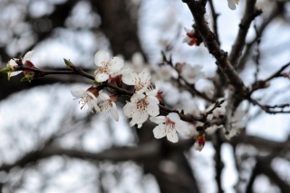 Spring Blossom sfondi gratuiti per cellulari Android, iPhone, iPad e desktop