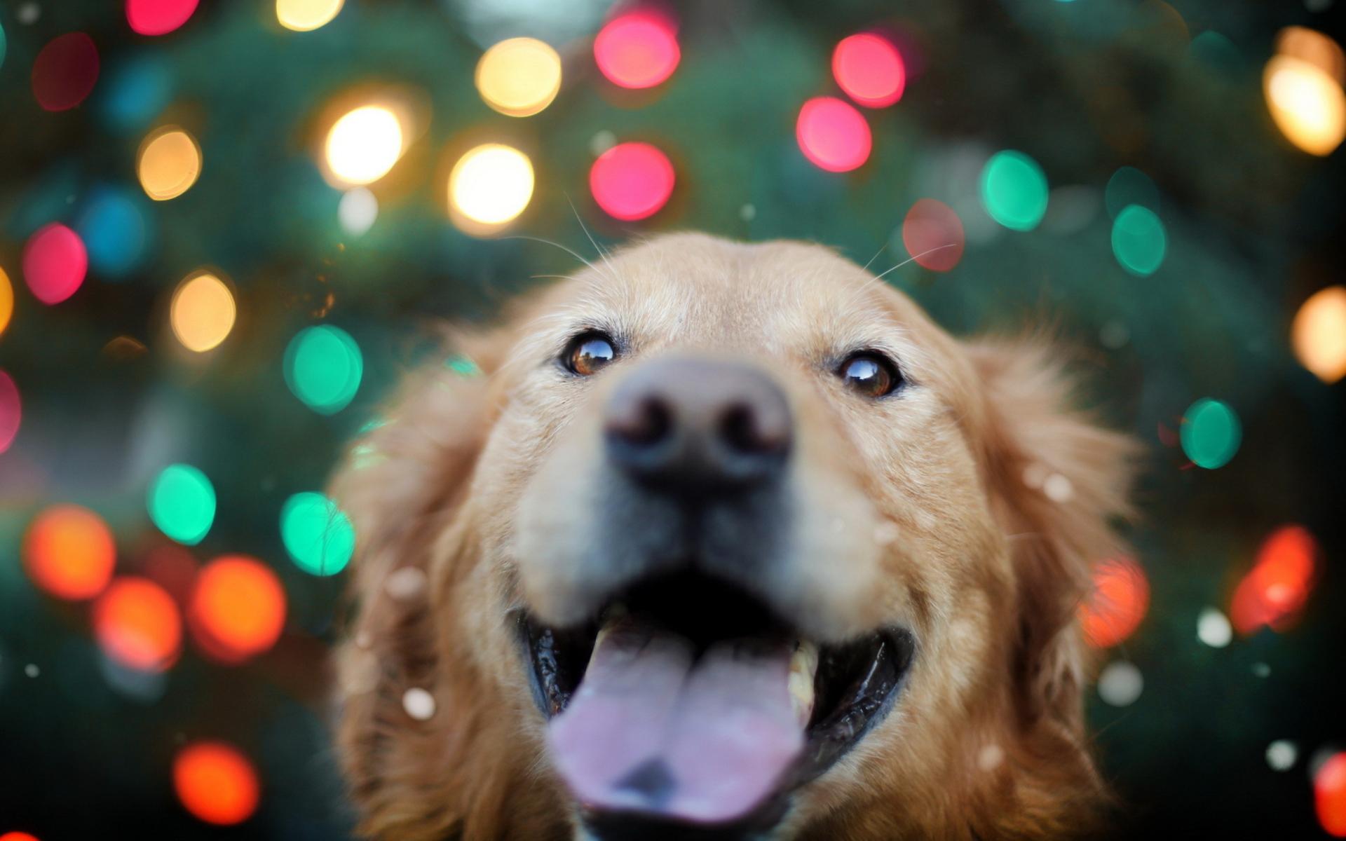 собака и светильник скачать