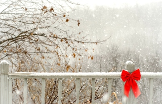 Red Bow On Fence - Fondos de pantalla gratis
