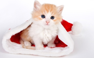 Cat And Santa Hat sfondi gratuiti per cellulari Android, iPhone, iPad e desktop