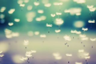 Flying Dandelion Seeds Background for Fullscreen Desktop 1024x768