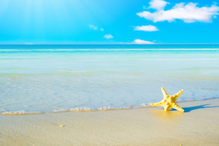 Starfish at summer beach Wallpaper for Android, iPhone and iPad