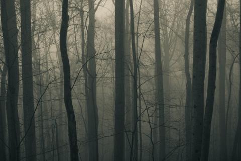 Dark Forest para Samsung S5367 Galaxy Y TV