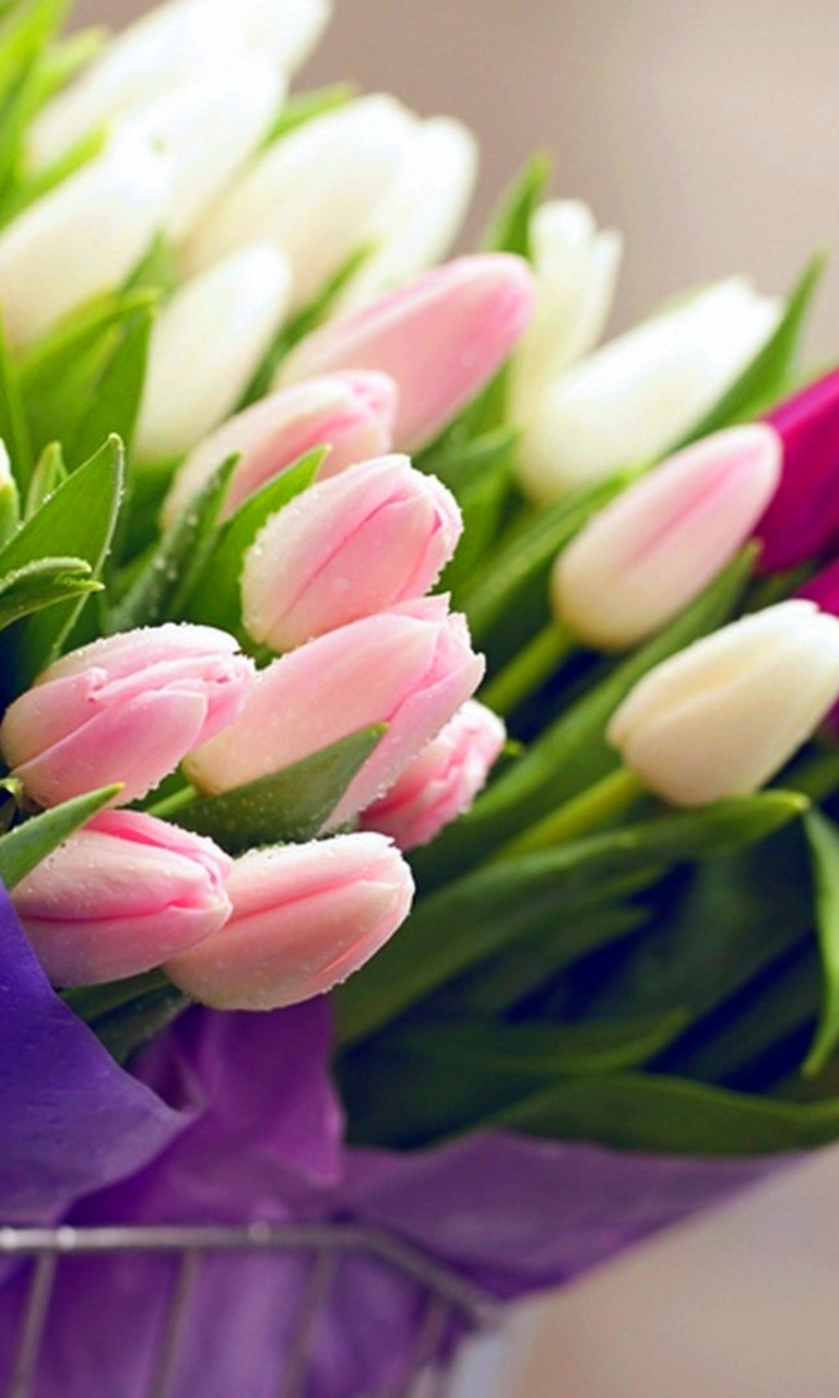 Обои Tulips for You 768x1280