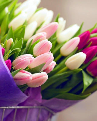 Tulips for You Background for Nokia C2-03