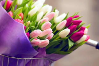 Tulips for You sfondi gratuiti per Samsung Galaxy Tab 4