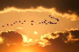 Golden Sky And Birds Fly Wallpaper for Android, iPhone and iPad
