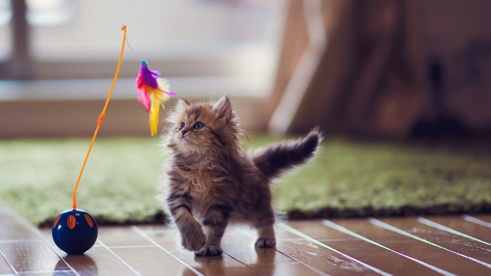 Kitten And Feather screenshot #1 1600x900