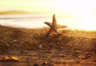 Sea Star On Beach Wallpaper for Android, iPhone and iPad