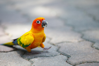 Funny Parrot Background for Android, iPhone and iPad