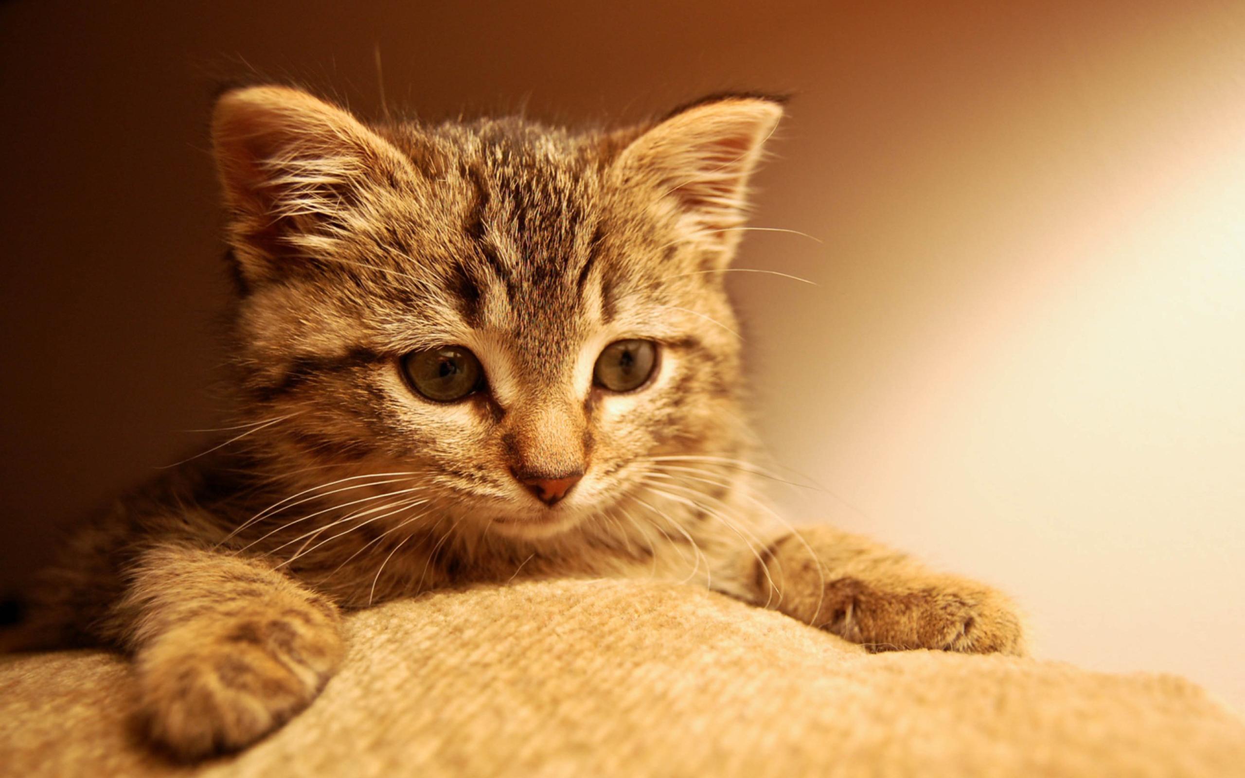 природа животные кот крупный план без смс