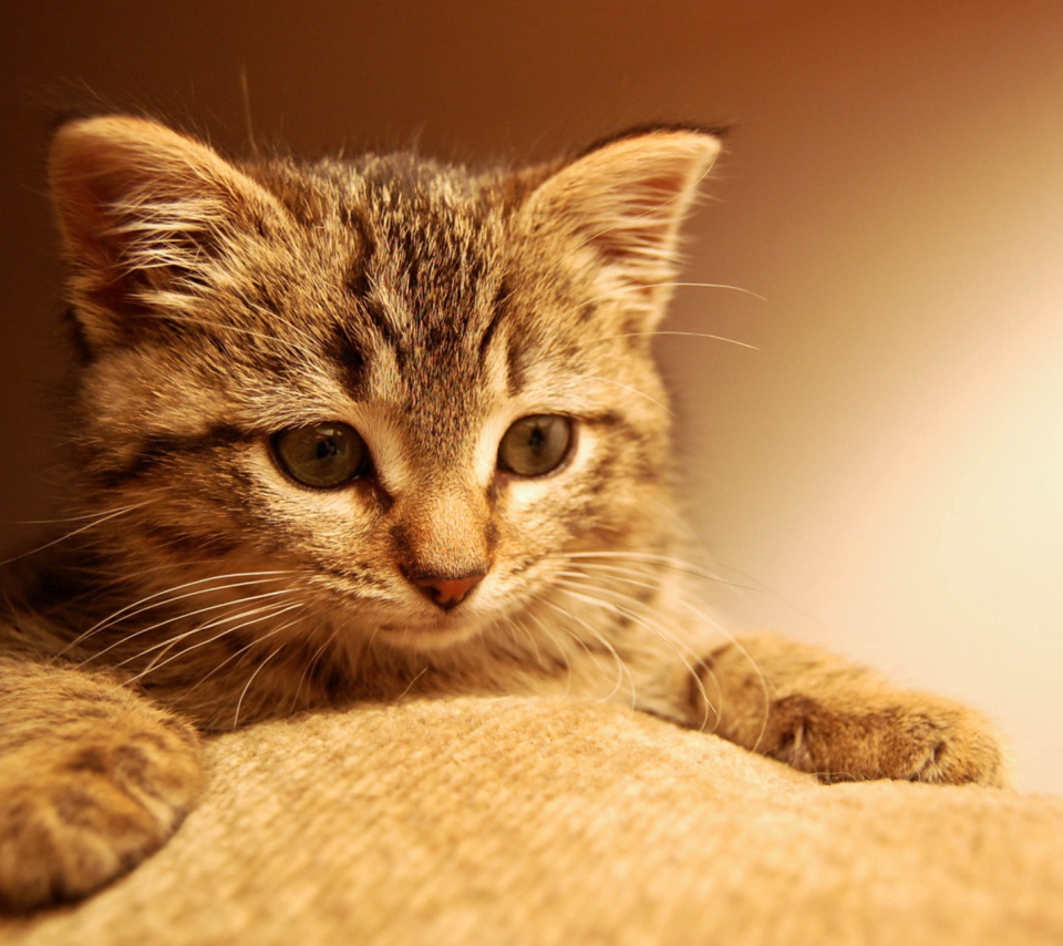 Nice Kitten para Sony Ericsson XPERIA PLAY