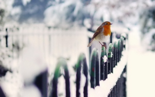 Winter Bird Background for Android, iPhone and iPad