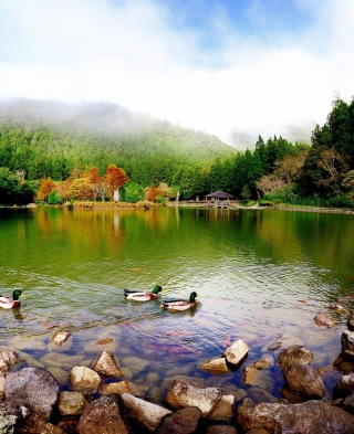 Picturesque Lake And Ducks - Fondos de pantalla gratis para iPhone 3G