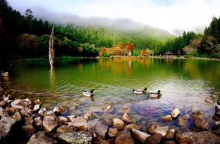 Picturesque Lake And Ducks - Obrázkek zdarma pro 1366x768
