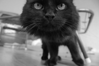 Free Black Kitten Picture for Android, iPhone and iPad
