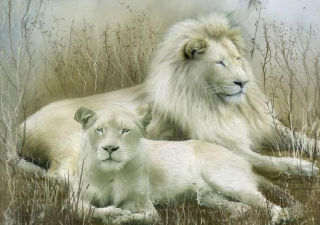 Free White Lions Picture for Android, iPhone and iPad