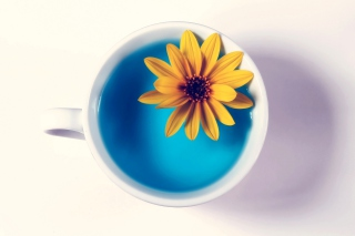 Yellow Flower Blue Water Background for Android, iPhone and iPad