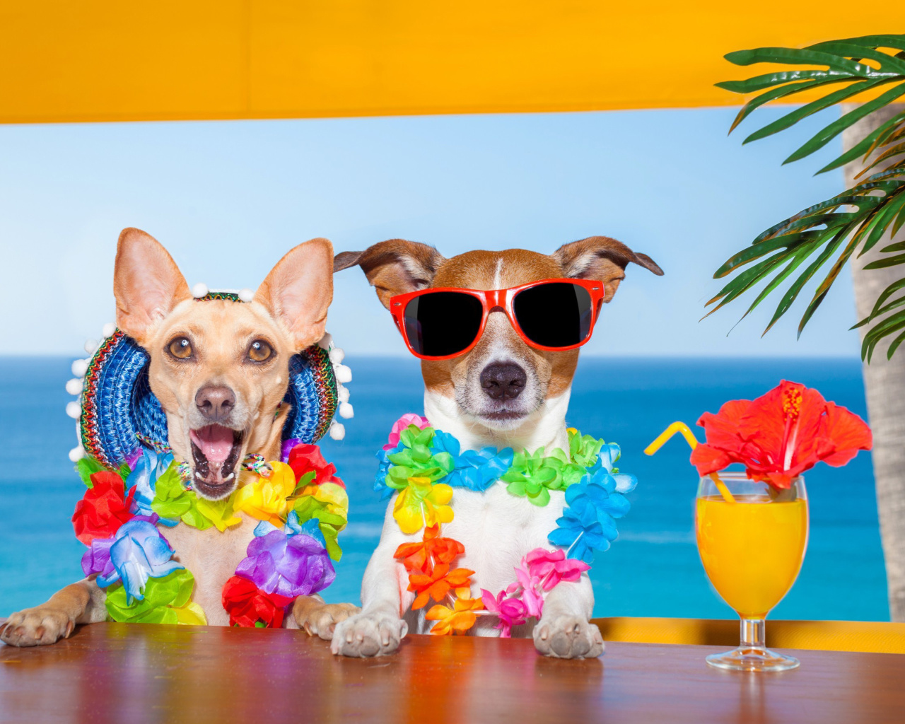 Screenshot №1 pro téma Dogs in tropical Apparel 1280x1024