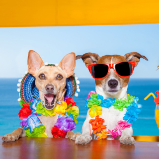 Dogs in tropical Apparel sfondi gratuiti per 1024x1024