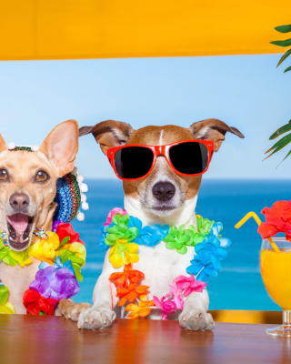 Dogs in tropical Apparel papel de parede para celular para 750x1334
