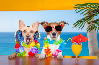 Kostenloses Dogs in tropical Apparel Wallpaper für Android, iPhone und iPad