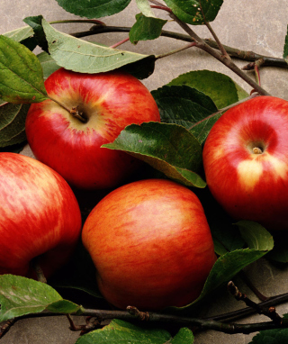 Free Red Apples Picture for Nokia C1-01