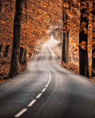 Kostenloses Road in Autumn Forest Wallpaper für 176x220