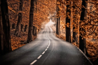 Kostenloses Road in Autumn Forest Wallpaper für Android 320x480
