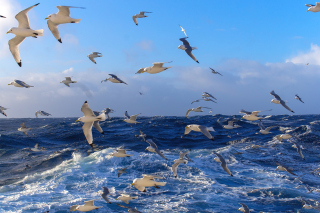 Wavy Sea And Seagulls Background for Android, iPhone and iPad