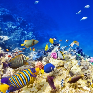 Diving in Tropics - Fondos de pantalla gratis para iPad 2