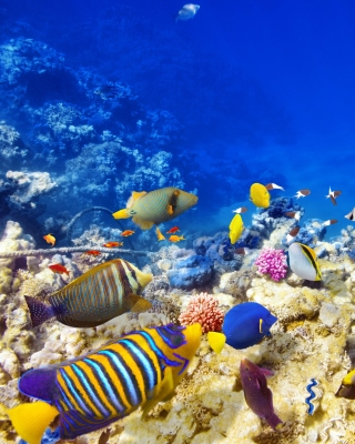 Diving in Tropics Wallpaper for Nokia Asha 306