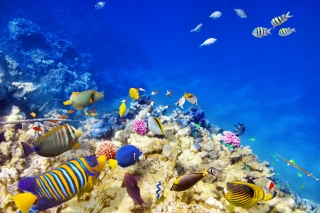 Diving in Tropics Background for Android, iPhone and iPad