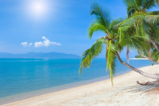 Coconut Paradise Wallpaper for Android 800x1280