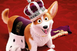 Queens Corgi Background for Nokia X2-01