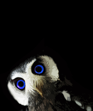 Funny Owl With Big Blue Eyes sfondi gratuiti per Nokia Lumia 925