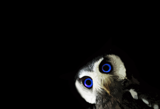 Funny Owl With Big Blue Eyes Wallpaper for Android, iPhone and iPad