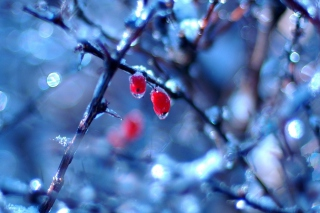 Two Frozen Berries Picture for Android, iPhone and iPad