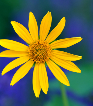 Free Yellow Flower Picture for 240x320