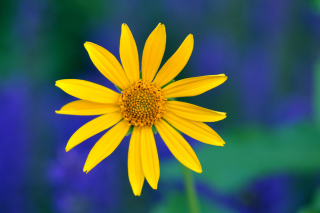 Free Yellow Flower Picture for Fullscreen Desktop 1024x768