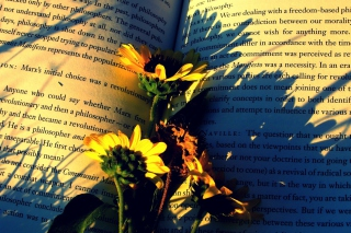 Kostenloses Yellow Daisies On Book Pages Wallpaper für Android, iPhone und iPad