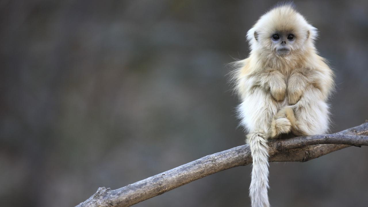 Cute Little Monkey Is Cold