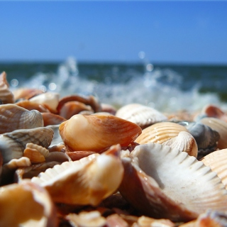 Kostenloses Seashells On Beach Wallpaper für 1024x1024