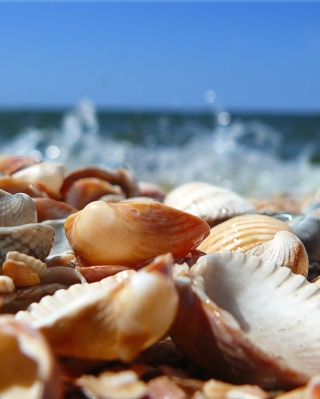Seashells On Beach sfondi gratuiti per Nokia Lumia 925