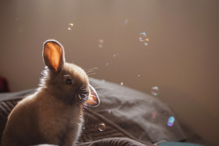 Grey cutest bunny Background for Android, iPhone and iPad