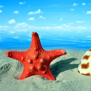 Seashell and Starfish - Fondos de pantalla gratis para iPad 2