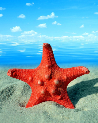 Free Seashell and Starfish Picture for iPhone 6 Plus